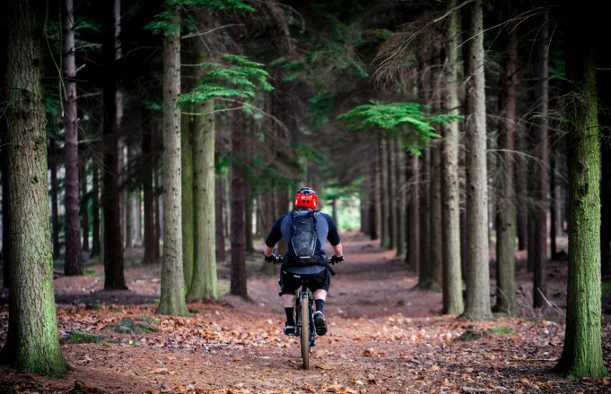 A person riding a bike down a dirt path in a forest